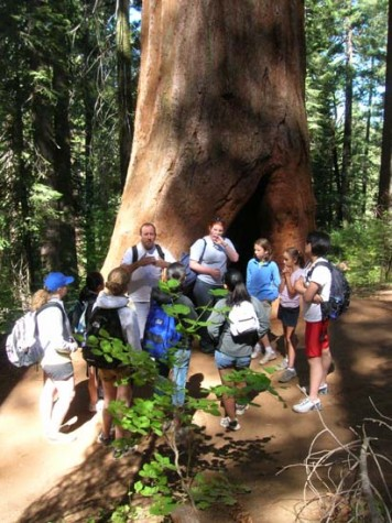Science department to offer course on redwoods