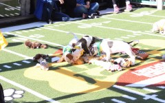 Puppies 'ruff' and tumble on the football field
