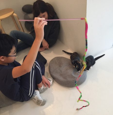 Cat cafe fails to live up to hype, high prices