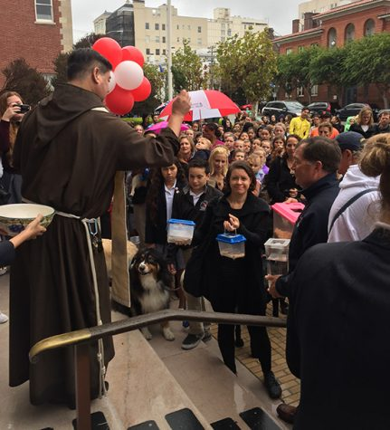 Animals blessed in honor of St. Francis