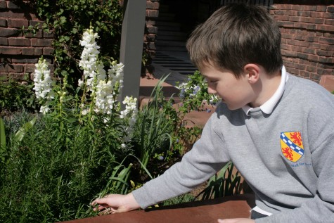Stuart Hall for Boys garden offers first-hand learning experience