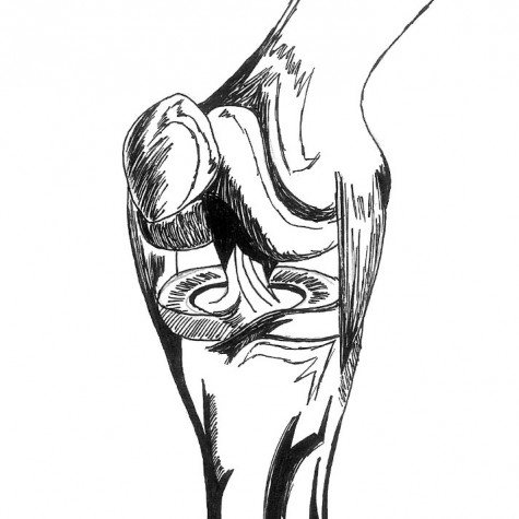 Anterior Cruciate Ligament RACHEL FUNG | The Broadview