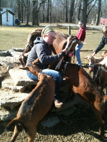 A counselor at Sprout Creek Farm  tends the resident goats who provides milk for cheese. The farm will sponsor service opportunities this summer.
