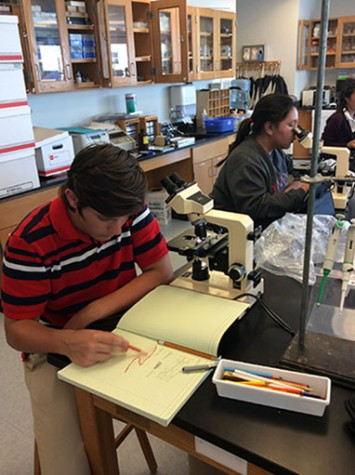 Seniors Sabrina Mendiola and Louis Bulivant observe different types of tissue cells under a microscope to determine their functions. Students draw their own versions of the different types of tissues they see through their microscope.
