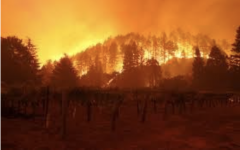 The Glass and Shady fires in Napa valley have burned over 11,000 acres of forests, homes and wineries. A Red Flag fire warning is in effect for most of northern California.