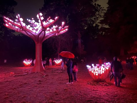 The Entwined lights turn on daily at dusk and turn off promptly at 8:30 p.m. The Peacock Meadow exhibit is part of the Golden Gate Park 150th Anniversary celebration and has free admission to all visitors.