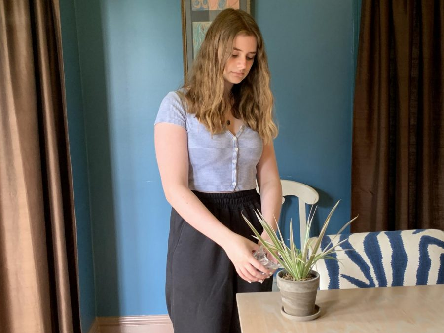 Sophomore Claire Abel waters her plant in her living room. To keep plants alive, water is added to help with photosynthesis and the movement of nutrients in the soil.